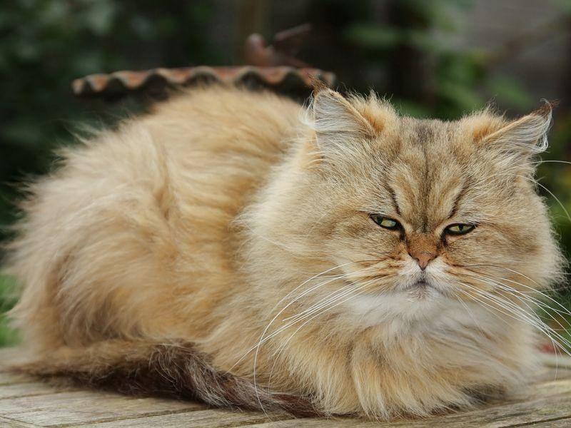 """Platz 4: Der Katzenname """"Mia"""" war 2012 am viertbeliebtesten"""