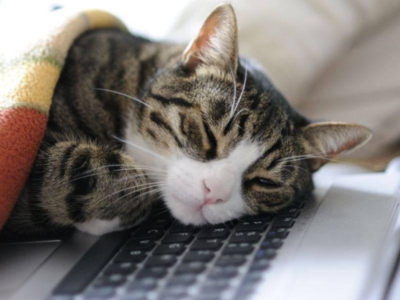 Schöner Schlafplatz für Katzen: Der Laptop