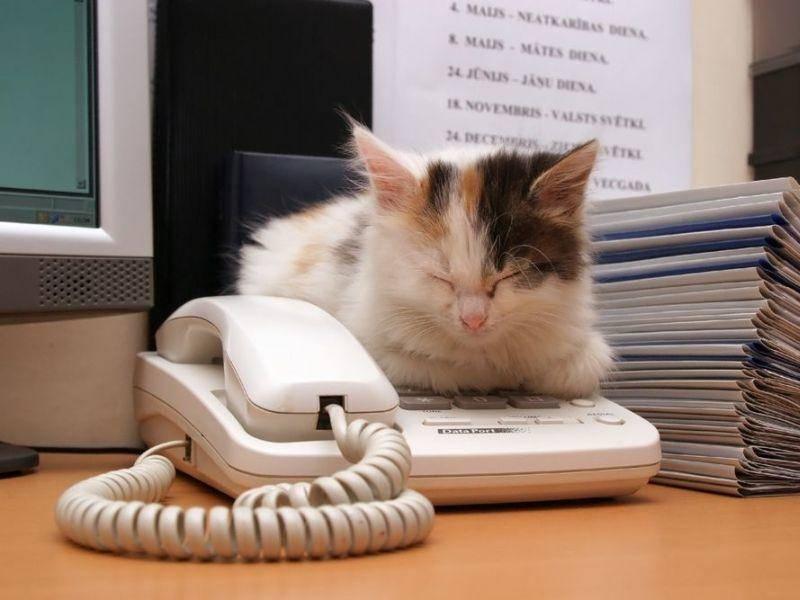 """""""Ich konnte nicht ans Telefon gehen, die Katze hat es als Schlafplatz benutzt."""""""