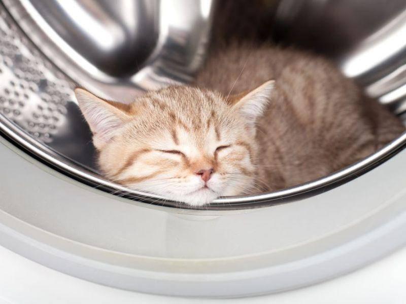 Dieser Schlafplatz sieht zwar gemütlich aus, ist aber für Katzen nicht ganz so gut geeignet