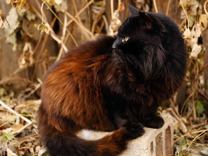 """Platz 2: Am zweithäufigsten registrierte die Tierschutzorganisation TASSO den Namen """"Luna"""""""