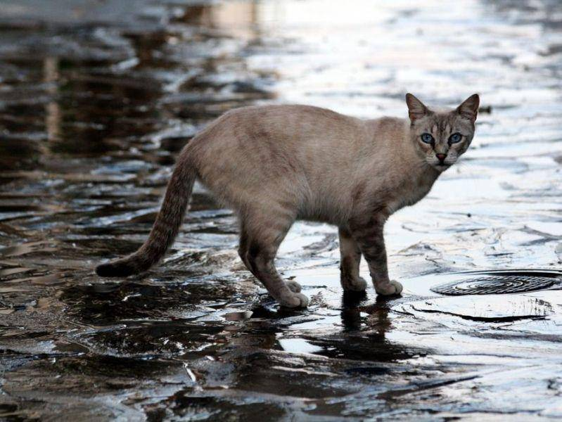 Spaziergang im Regen? Macht dieser Katze nichts aus