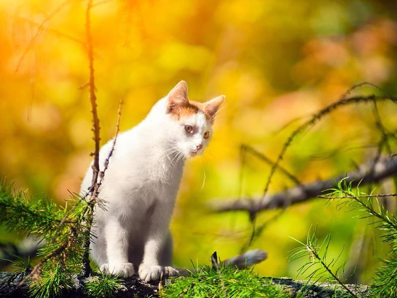 Weiße Katze im Morgenlicht: Die Entdeckungstour kann beginnen