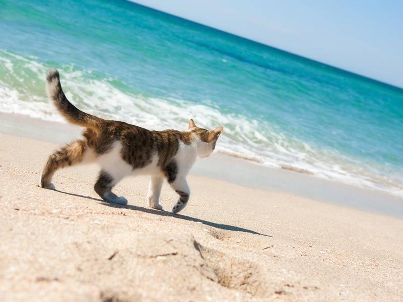 Katze macht einen Strandspaziergang und entdeckt das Meer