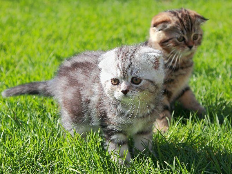 Katzen mit Streifen: Trifft man in vielen Haushalten