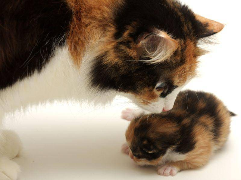 So klein und schon so bunt: Katzenmama mit Kitten — Bild: Shutterstock / Evgeny Dubinchuk