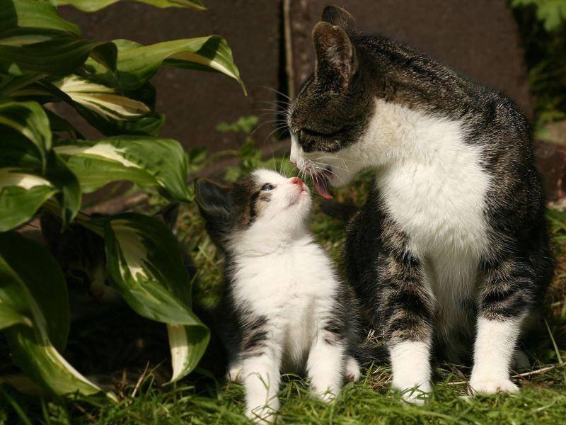 Diese Tigerkatze und ihr Kitten können die Familienähnlichkeit nicht leugnen