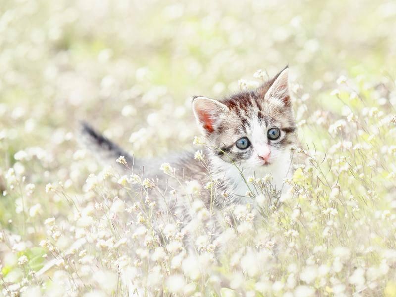 Süßes Kätzchen verliert sich in einer Blumenwiese