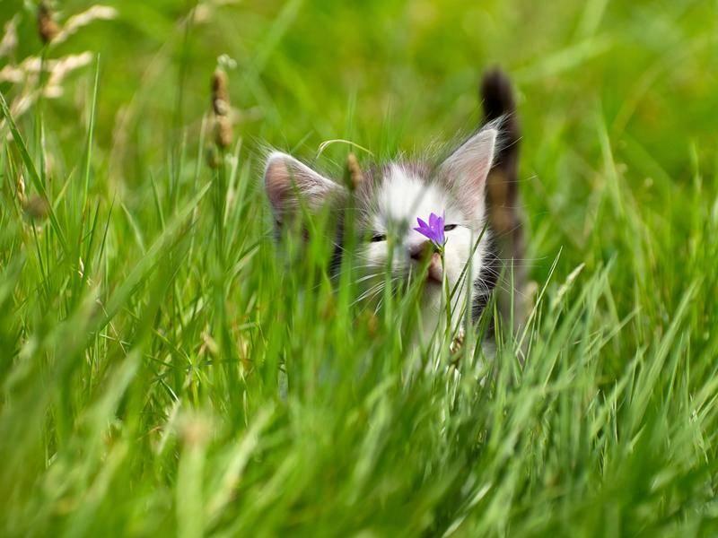 Kleines Kätzchen im hohen Gras kann kaum was sehen