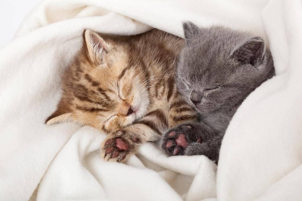 Wahre Tierliebe: Knuddelige Katzenfreunde