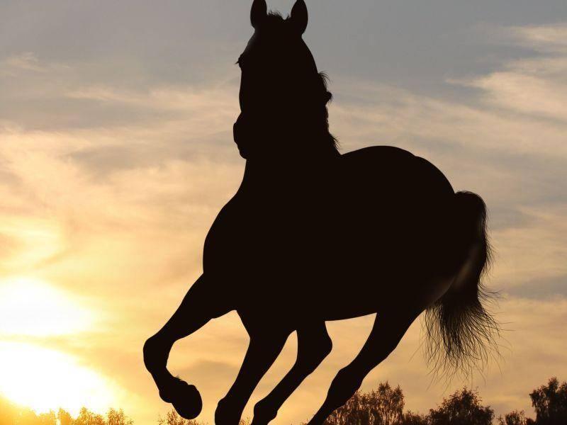 Galoppierendes Pferd im Sonnenuntergang - einfach schön!