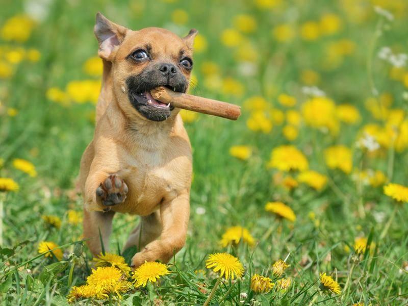Rassmo-Hund: Emma: Sicherte sich den zweiten Platz