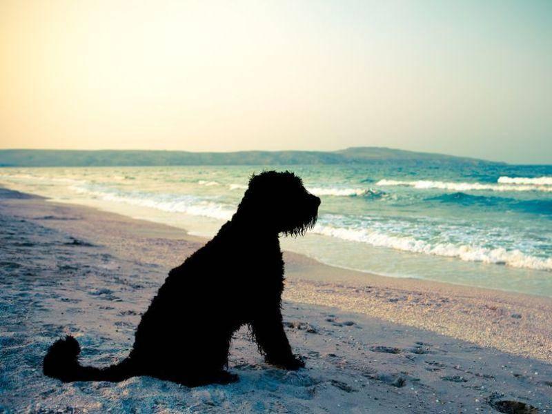 Urlaubsstimmung: Ein Hund genießt den Sonnenuntergang