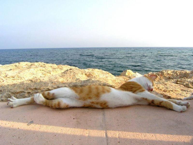 Ein Tag am Meer? Großartig! - Eine Katze genießt das Leben