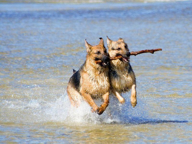 Urlaub mit dem Hund: Auf los geht´s los!