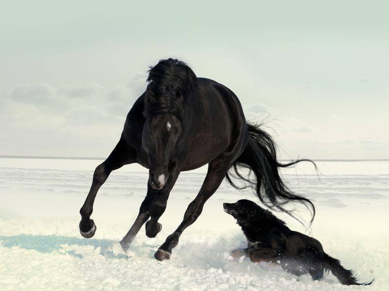 Fangen spielen: Pferd und Hund im Schnee-Galopp um die Wette