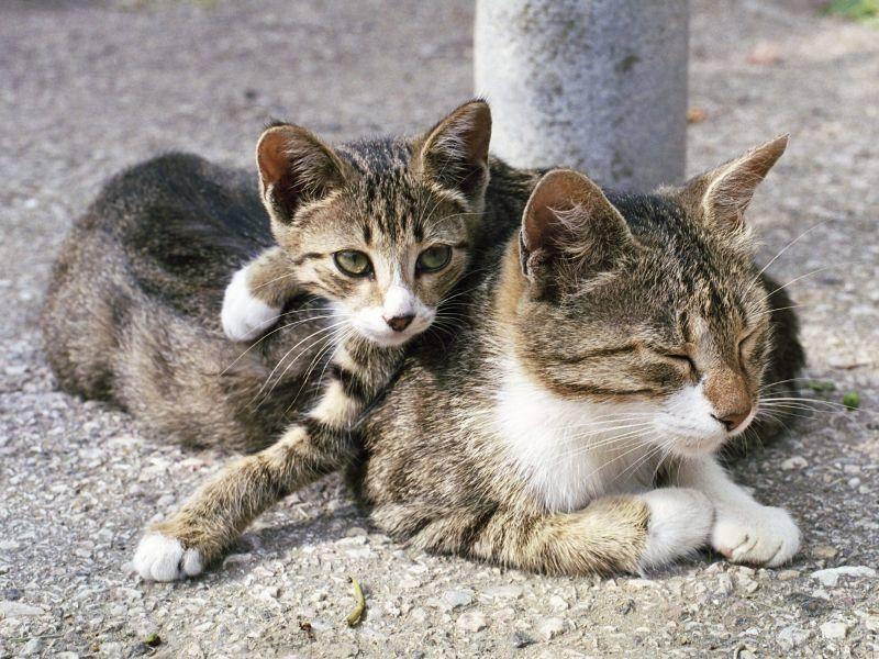 Katzen beim Sonnenbad: Dieses Kitten hat sich einen besonders gemütlichen Platz ausgesucht — Bild: Shutterstock / photobank.kiev.ua