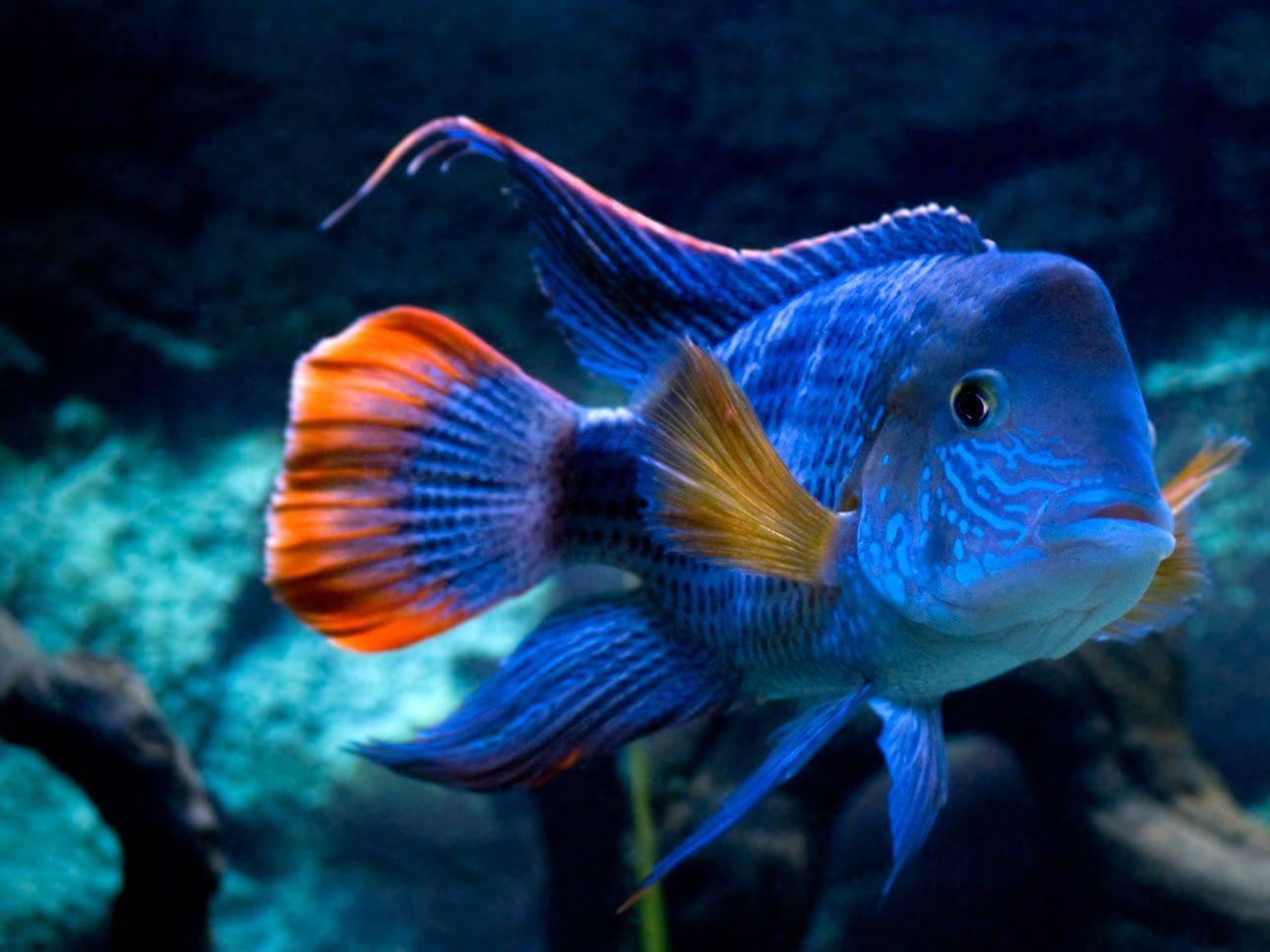Tropischer Fisch: Faszinierend schön