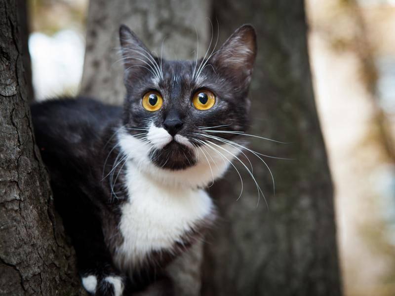 Irgendwas hat diese Katze auf ihrer Entdeckungstour erschreckt