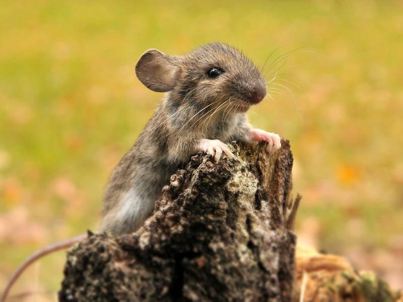 Junge Maus hat kein Geld und fickt statt dessen mit dem Handwerker