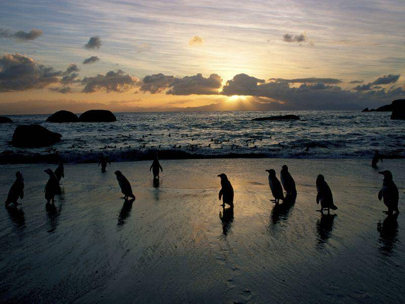 Romantisch: Afrikanische Pinguine im Sonnenuntergang — Bild: Shutterstock / HPH Image Library