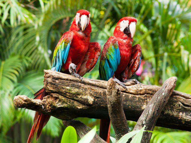 Toller Anblick: Aras in knallbuntem Federkleid — Bild: Shutterstock / Muellek Josef