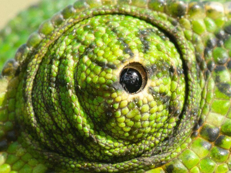 Huch, wem gehört denn dieses grüne Tierauge? — Bild: Shutterstock / Tom linster