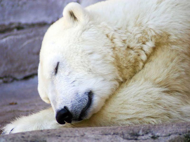 Gute Nacht, Eisbär! — Bild: Shutterstock / Jody Dingle