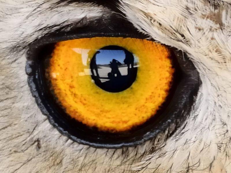 Dieses Tier mit den orangen Augen mag es extravagant — aber welches ist es? — Bild: Shutterstock / MLBJ