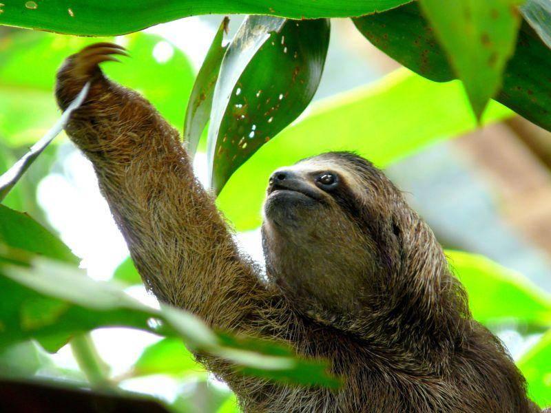 Gemütlicher Typ:Faultier genießt die Natur — Bild: Shutterstock / Nacho Such