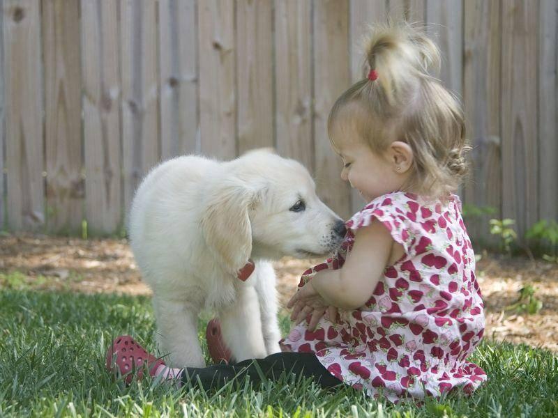 ... weil Golden Retriever unheimlich kinderlieb sind — Bild: Shutterstock / Ilyssa Sky Tonnessen