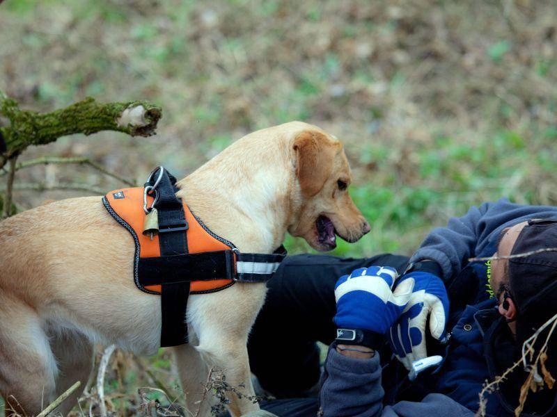 ... weil Golden Retriever Menschenleben retten können — Bild: Shutterstock / amidala76