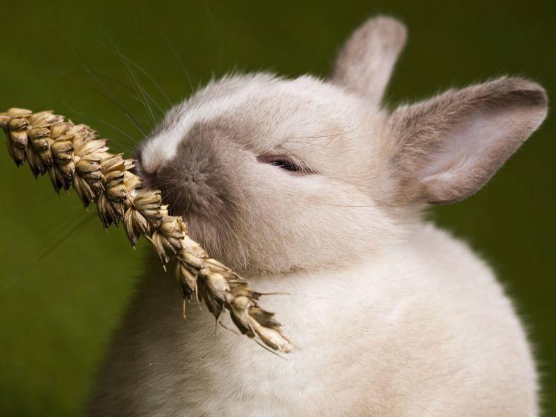 Guten Appetit kleiner Osterhase — Bild: Shutterstock / Sebastian Duda