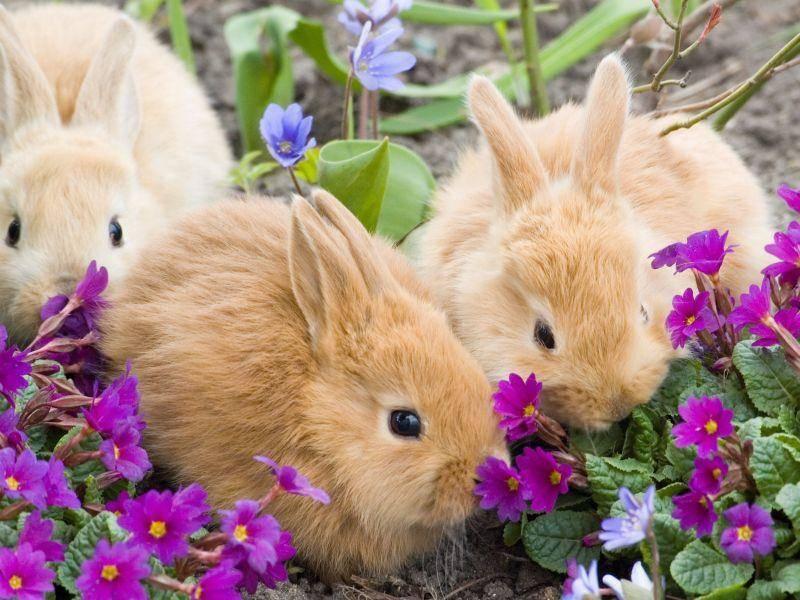 Im Sonnenschein: Osterblümchen und ein paar rote Hasenkinder — Bild: Shutterstock / constructer