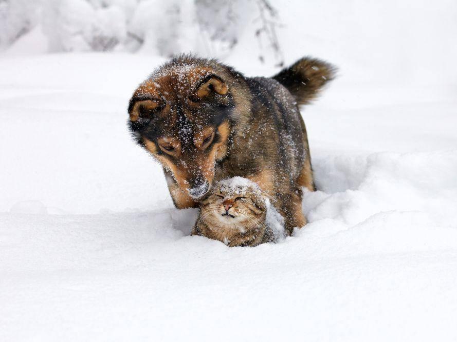 Platz 3: Diese beiden Kandidaten nehmen den Winter sportlich und machen sich damit beliebt — Bild: Shutterstock / vvvita