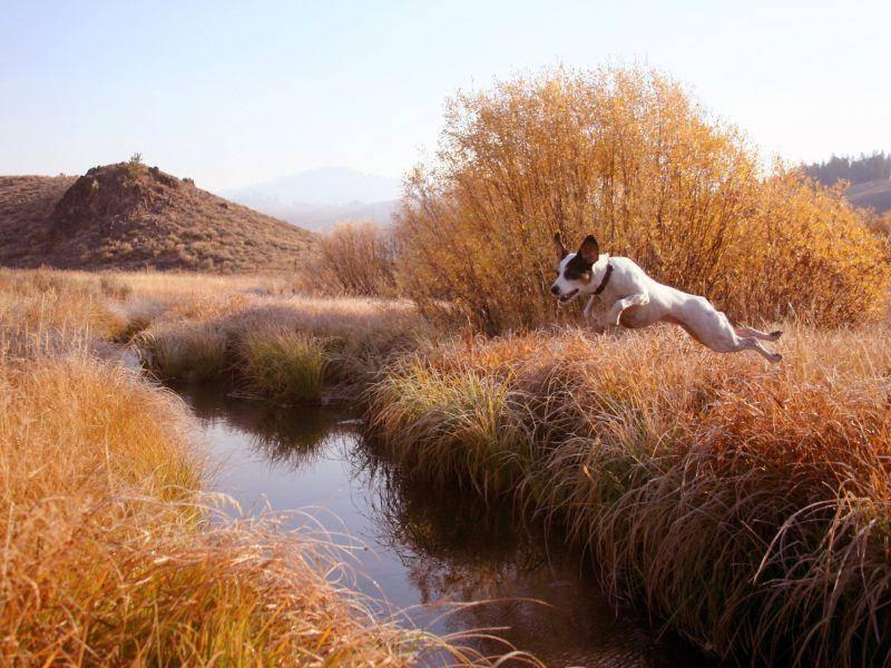 Großes Hinderniss? Nicht für Hunde wie Jack Russell Terrier — Bild: Shutterstock / Harm Kruyshaar