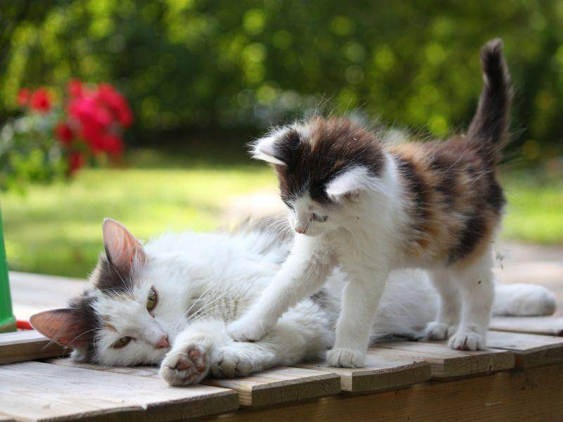 """Katzenmutter wird belagert: """"Aufstehen, mir ist langweilig!"""" — Bild: Shutterstock / Anastasija Popova"""