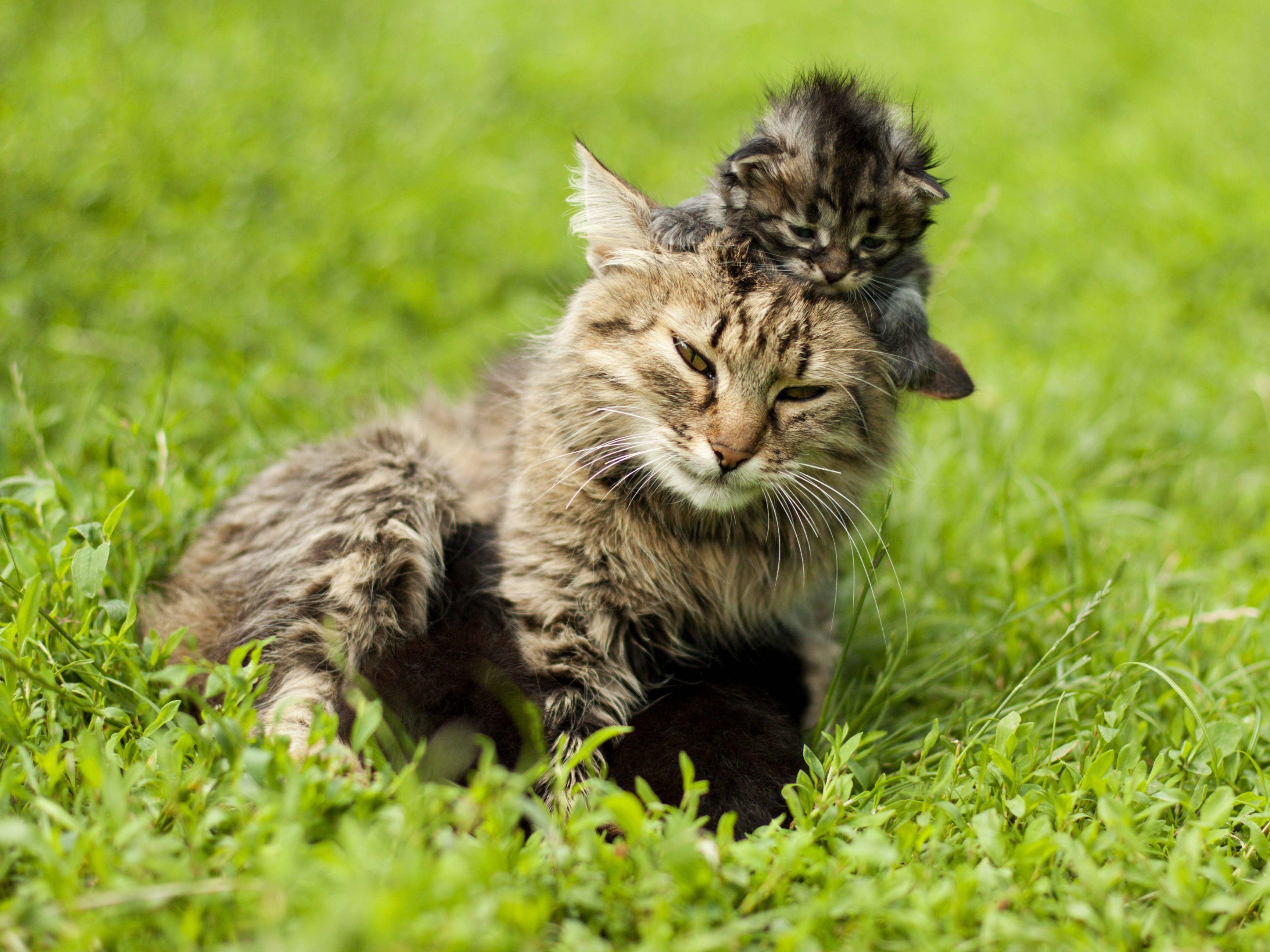 Platz 3: Diese beiden Katzen leisten Teamarbeit und holen sich den besten Platz! — Bild: Shutterstock / Kozub Vasyl