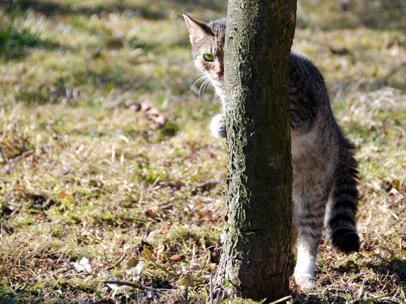 Diese Katze muss das Versteckenspielen noch üben — Bild: Shutterstock / David Maska
