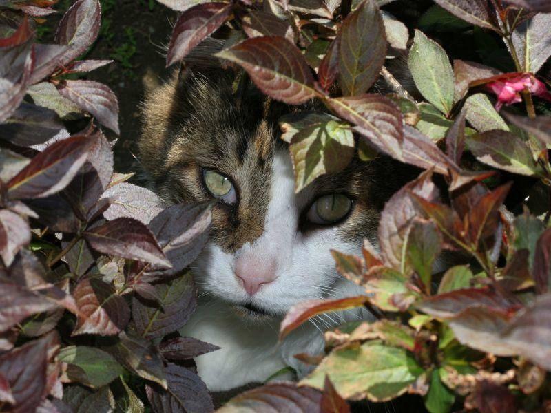 Wer versteckt sich denn da im Herbstlaub? Katze auf Tour — Bild: Shutterstock / Joy Brown
