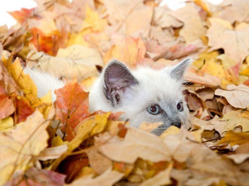 Versteck im Farbenmeer: Junge Katze fordert zum Suchen heraus — Bild: Shutterstock / Tony Campbell