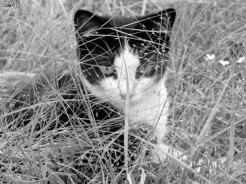 Bei diesem Katzenkind ist nicht nur das Bild schwarzweiß — Bild: Shutterstock / Mark Shearin Images