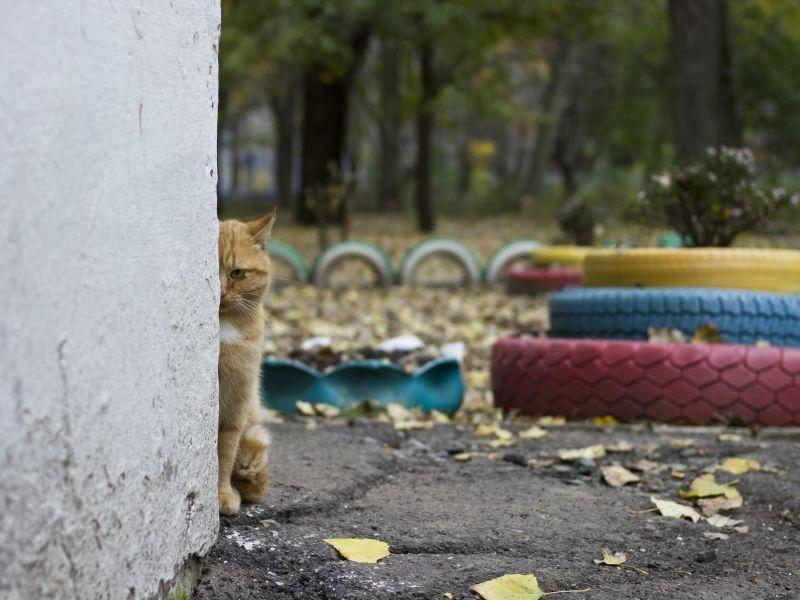 Draußen lauern viele tolle Verstecke für Katzen — Bild: Shutterstock / GlebStock