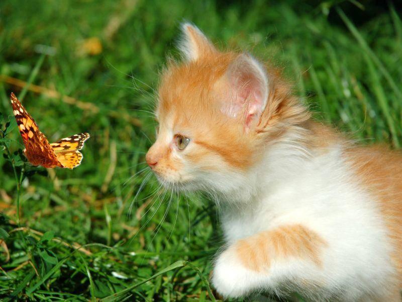 Aufregender Ausflug: Katze trifft Schmetterling — Bild: Shutterstock / Nataliia Melnychuk