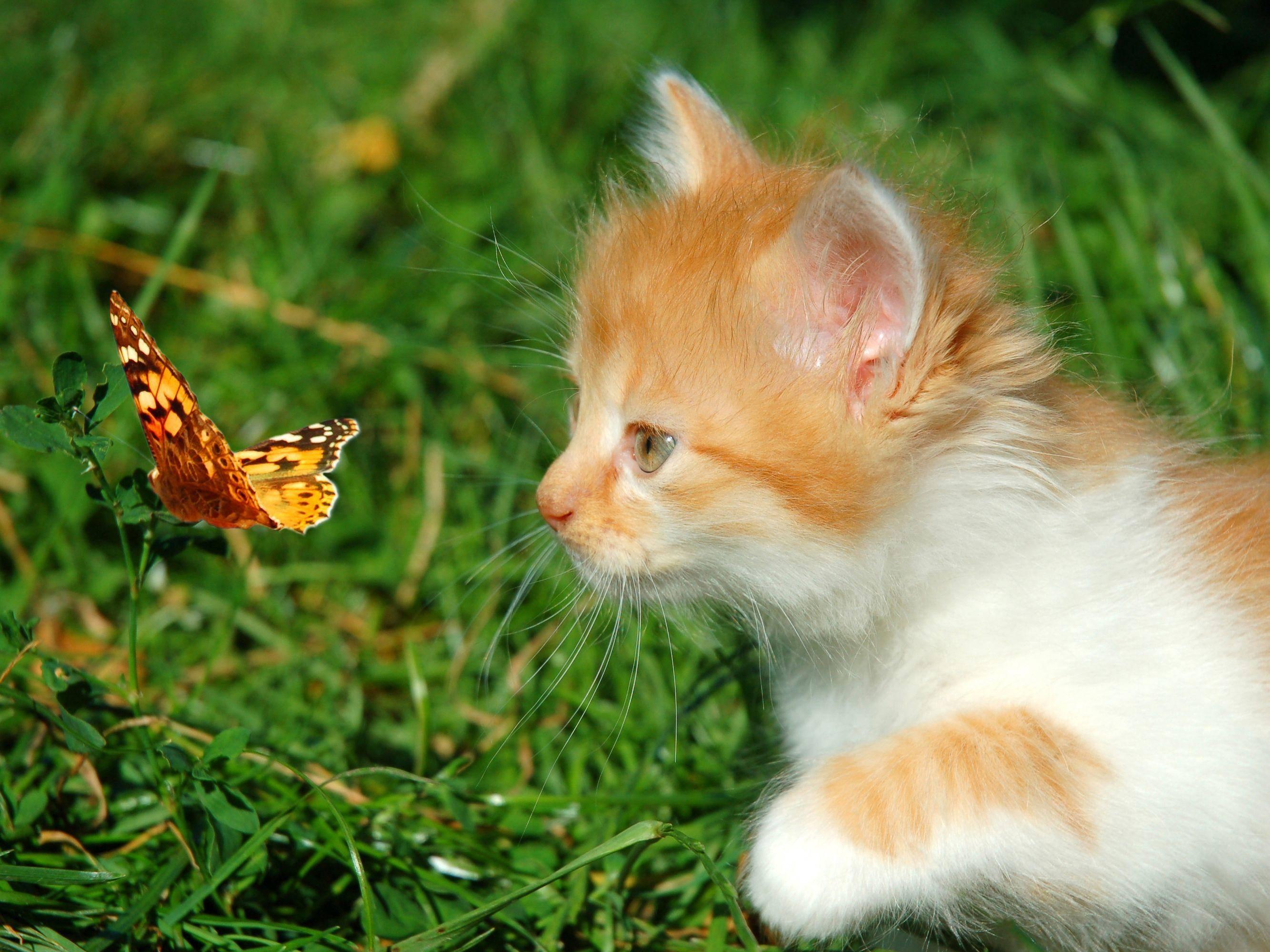Platz 4: Entzückt hat euch auch dieses kleine Kätzchen auf Entdeckungstour. Resultat: Fast 3000 Likes! — Bild: Shutterstock / Nataliia Melnychuk