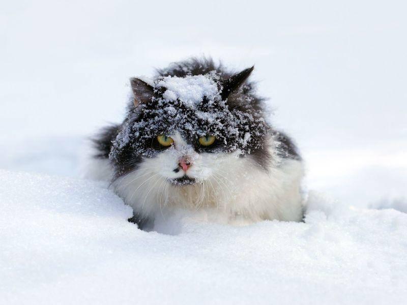 """Mutige Katze: """"Ich wusste, dass der Schneeausflug keine gute Idee war."""" — Bild: Shutterstock / vvvita"""