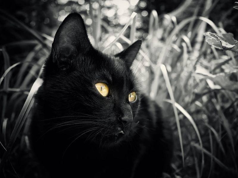 Katze auf Tour: Nicht ganz schwarzweiß, aber wunderschön — Bild: Shutterstock / SSokolov