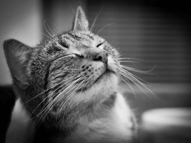Tigerkatze: Auch in Schwarzweiß einfach tierisch gut drauf! — Bild: Shutterstock / PHOTOCREO Michal Bednarek