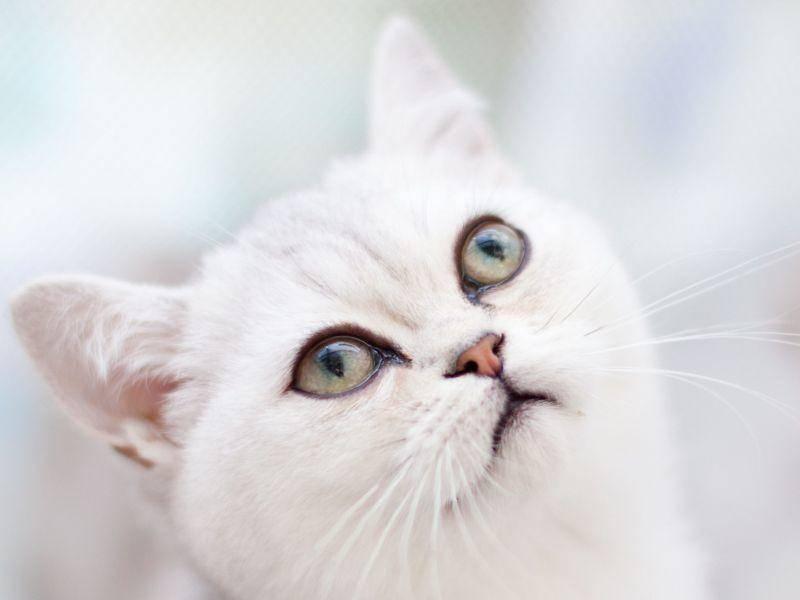 ... weil Katzen von Nahem besonders schön sind — Bild: Shutterstock / Shvaygert Ekaterina