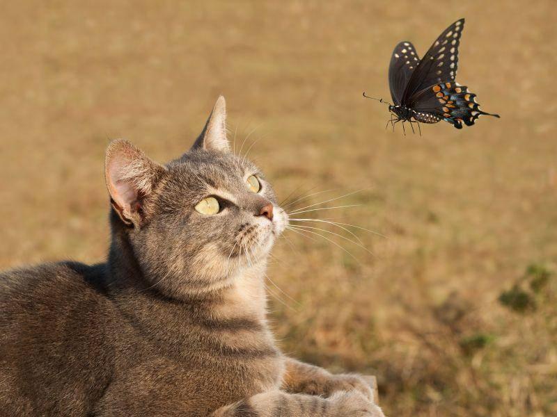 Beschäftigung für Katzen: Schmetterlinge beobachten — Bild: Shutterstock / Sari ONeal